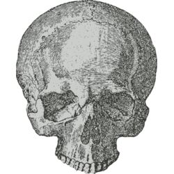 Medical Skull 1 Thumbnail
