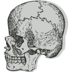Medical Skull 4 Thumbnail