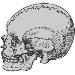 Medical Skull 5 Thumbnail
