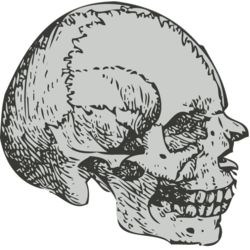 Medical Skull 6 Thumbnail