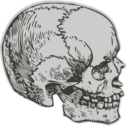 Medical Skull 8 Thumbnail