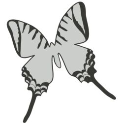 Girly Realistic Butterflies 5 Thumbnail